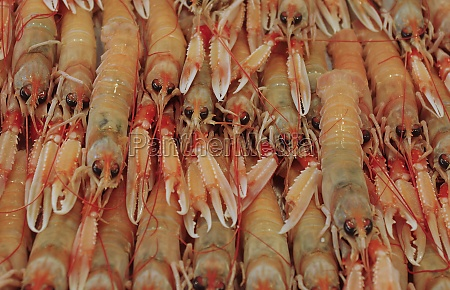 shrimps at a mediterranean market