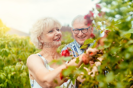 senior man and woman cutting the