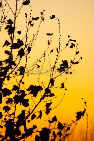 orange sunset and leaf reggio emilia