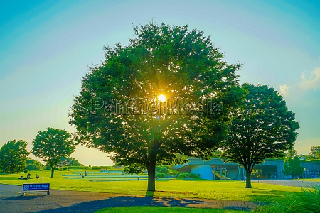 light of the fresh green of