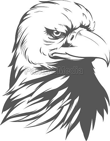bald eagle falcon hawk head silhouette
