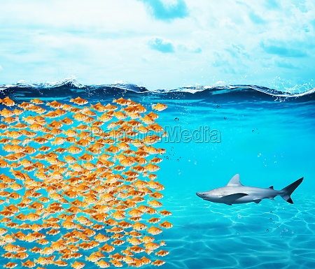 goldfishes group make a wall against