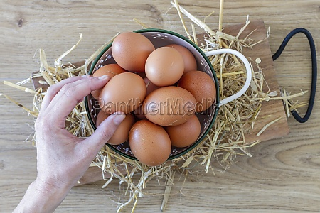 hand takes brown chicken eggs from