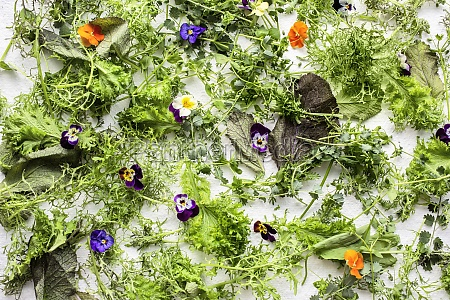 herbs lettuce and flowers on a