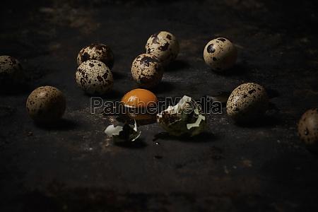 quail eggs on dark background