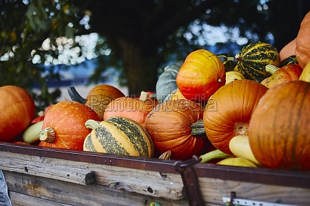 different pumpkins on a wooden cart