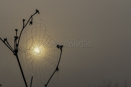 spider web in sunrise sun
