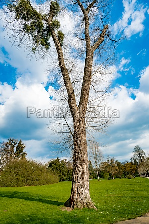a single tree standing alone with