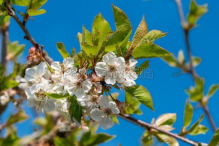 beautiful floral image of spring branches