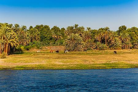egypt sunrise at the nile cruise