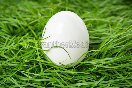 white chicken egg lies in the