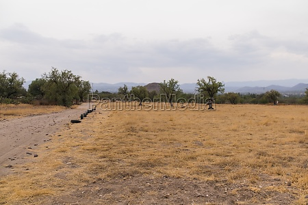 dry grass field with trees and
