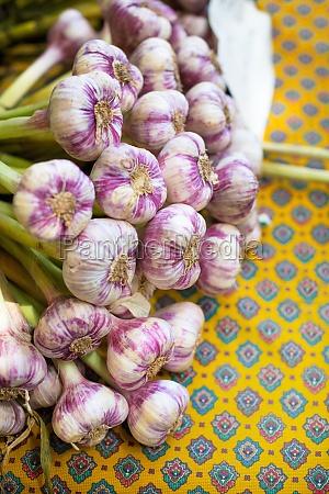 fresh garlic on a bright yellow