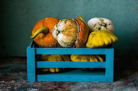 decorative pumpkins in a blue box