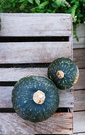 two green pumpkins at a wooden