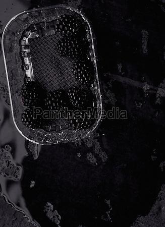 blackberries in a plastic punnet