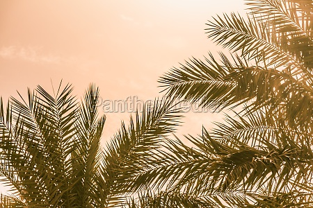 tropical tourism paradise palms in warm