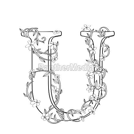 letter u floral sketch
