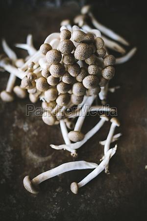 fresh shimeji mushrooms