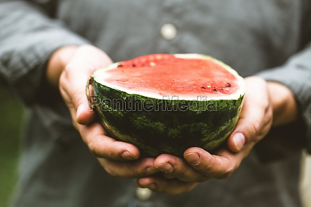 farmers hands with fresh watermelon