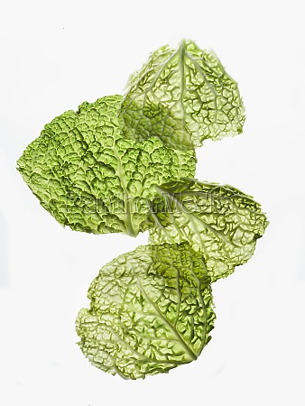 two fresh savoy cabbage leaves on