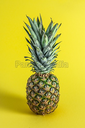 fresh pineapple on a yellow background