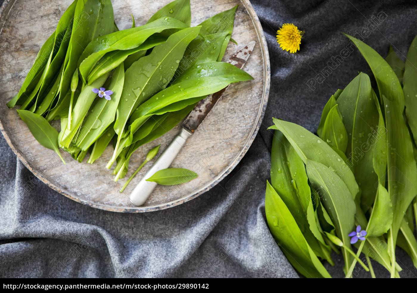 fresh, ramsons, (wild, garlic) - 29890142