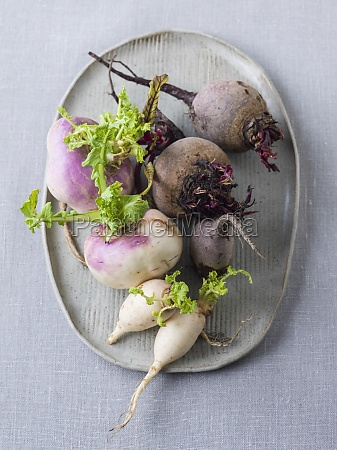 winter vegetables beetroot navettes radish