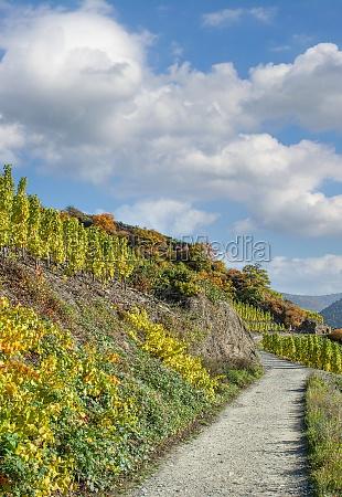 vineyard in ahrtal rhineland palatinate germany