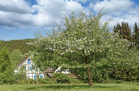 springtime in bergisches land north rhine