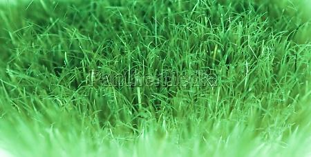 artificial grass texture