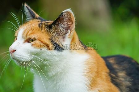 tortoiseshell cat nestled in prairie