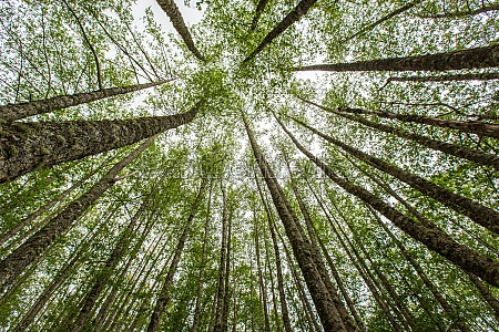 forest summer landscape summer forest tree