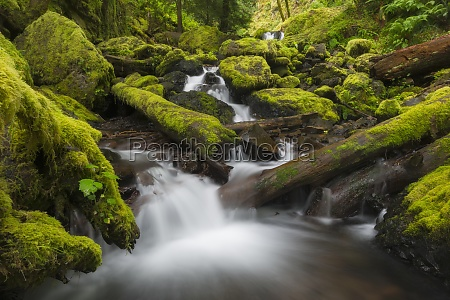 united states oregon small creek with
