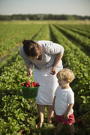 mother and toddler son picking ripe