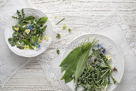 healthy spring plants food ingredients