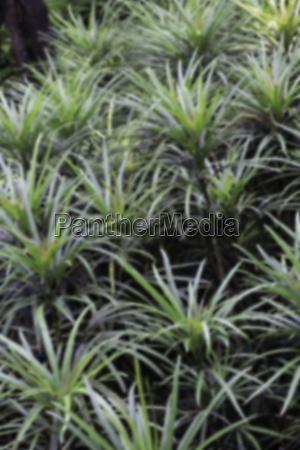 tropical green surroundings in outdoor garden