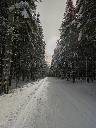 trees covered with snow along a
