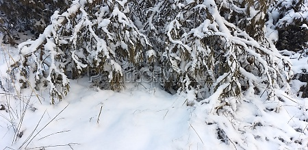 snow covered tree branches in the