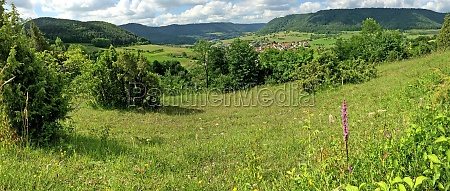 gymnadenia orchid with panoramic view to