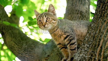 cute gray cat sitting on tree