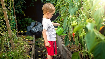 little toddler boy watering ripening vegetables