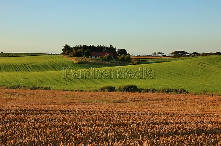 rural summer landscape in gottrup denmark