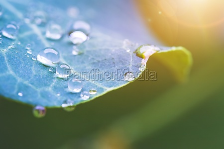environment freshness and nature concept macro