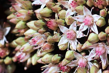 macro view of delicate pink flowers