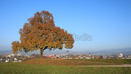 golden tree on a hill in