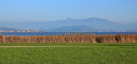 green meadow and reed at lake