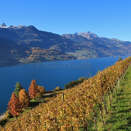 vineyard and multi colored trees at