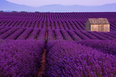 stone house at lavender field