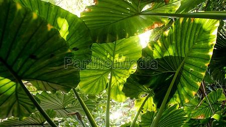 sun shining through big leaves in